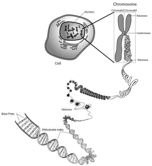 9431 Genes Proteins Scimathmn